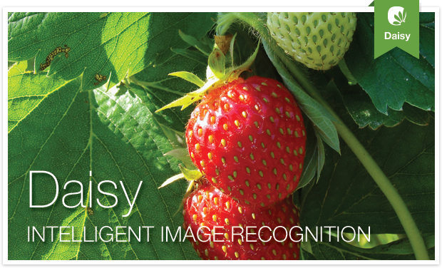 Daisy: Intelligent Image Recognition