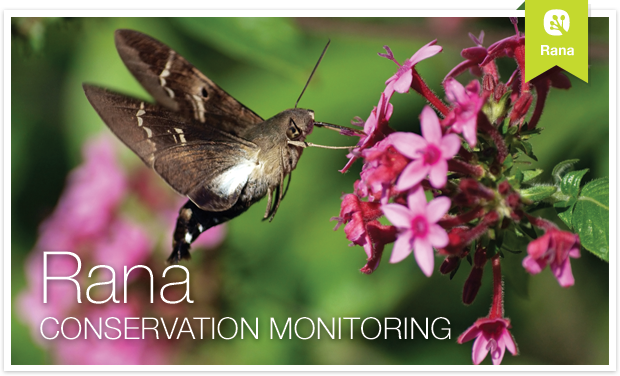 Rana: Conservation Monitoring